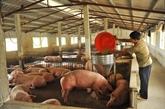 Le secteur de l'élevage entre opportunités et défis du CPTPP