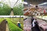 Pour une efficacité dans la production agricole