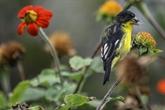 Le monde évalue lampleur de la crise de la biodiversité