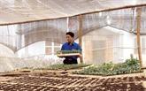 Agriculture : un jeune Mông de Son La applique des technologies israéliennes