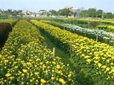 Hà Nam : quand horticulture et tourisme font bon ménage à Phù Vân