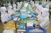 Le Vietnam, 2e exportateur de céphalopodes au Japon