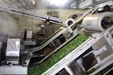 Hà Giang se dote dune usine de thé bio équipée de technologies japonaises