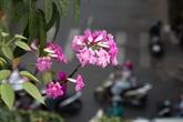Hô Chi Minh-Ville : plus de fleurs, plus de bonheur!