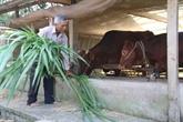 Aider les Khmers à Soc Trang à sortir de la pauvreté