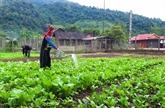 Une forte baisse de la pauvreté au sein des ethnies minoritaires