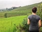Découverte d'un gène aidant à augmenter les rendements de riz dans les sols salins