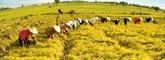 Vietnam - Japon: de belles perspectives de coopération dans l'agriculture