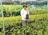 Une opportunité en or pour les paysans de Bên Tre