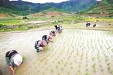 Saison deau à Khau Pha