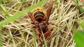 Avec des insectes tueurs, l'agriculture mondiale passe au biocontrôle