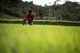 La FAO appelle à intégrer la biodiversité dans l'agriculture