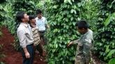 Bond des exportations nationales de poivre en Inde