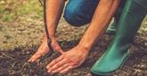 Reforestation: un appel à projets pour
