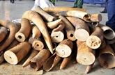 Renforcer la lutte contre le commerce illégal d'espèces sauvages