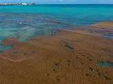 Guadeloupe: Hulot annonce un plan contre les sargasses