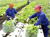 Vietnam et Pays-Bas œuvent pour de nouvelles variétés de légumes