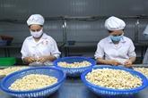 Plus de 141 mille tonnes de noix de cajou exporté à létranger