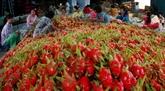 Hausse des exportations de produits agricoles via la porte frontalière de Lào Cai