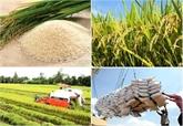 Riz et produits aquatiques: les exportations au 2e semestre seraient optimiste