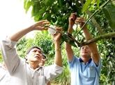 Formations techniques pour les paysans de la province de Dông Thap