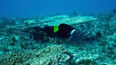 Grande Barrière: des écologistes en appellent à lUNESCO