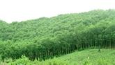 Le Vietnam émet un million de crédits carbone sur le marché international