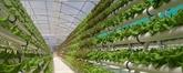 Des étudiants vietnamiens étudient le modèle de l'agriculture high-tech d'Israël