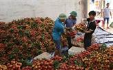 Fruits et légumes: hausse de 20% du chiffre d'affaires à l'export au 1er semestre