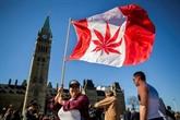 Le Canada avance vers la légalisation du cannabis récréatif