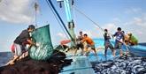 Le Vietnam s'engage pour le développement de la pêche responsable et durable