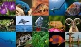 Séminaire de formation sur le jugement des affaires liées aux animaux sauvages
