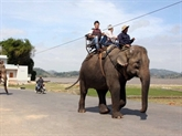 Dak Lak applique un modèle touristique respectueux des éléphants
