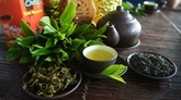 Des thés vietnamiens primés au 1er concours