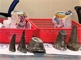 Saisie de cornes de rhinocéros à l'aéroport de Tân Son Nhât
