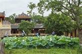 Les lotus blancs s'épanouissent à la Cité royale