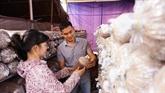 Bùi Minh Thang, la passion des champignons