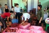 Les États-Unis, premier importateur du Vietnam au 1er semestre