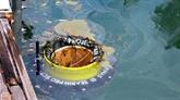 Cân Tho et une organisation néerlandaise coopèrent dans la collecte des déchets sur les rivières