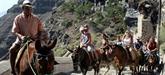 Grèce: stop à l'exploitation des ânes à touristes de Santorin