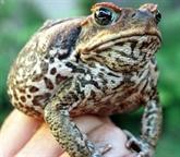 En Australie, 7% des reptiles sont menacés d'extinction