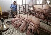 Les exportations de viande porcine et de volailles sur la bonne voie