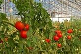 Utiliser les technologies pour créer la valeur ajoutée agricole