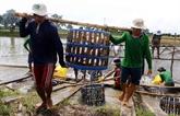 Pangasius: hausse de plus de 130% des exportations vers les EAU