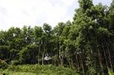 Tây Nguyên: reboisement de 12.500 ha de forêt pendant la saison des pluies