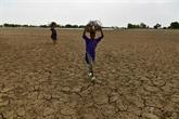Le Niger veut réduire la consommation de bois pour l'Aïd al-Adha