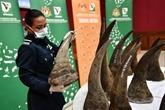 Malaisie: saisie record de cornes de rhinocéros
