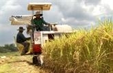 L'Algérie, un marché prometteur pour le riz vietnamien