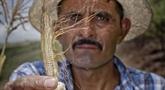 Sécheresse: l'ONU se préoccupe de la sécurité alimentaire