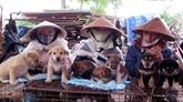 Hàng, le marché de fin d'année à Hai Phong